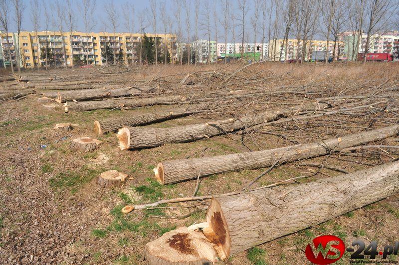 drzewa wycinka1