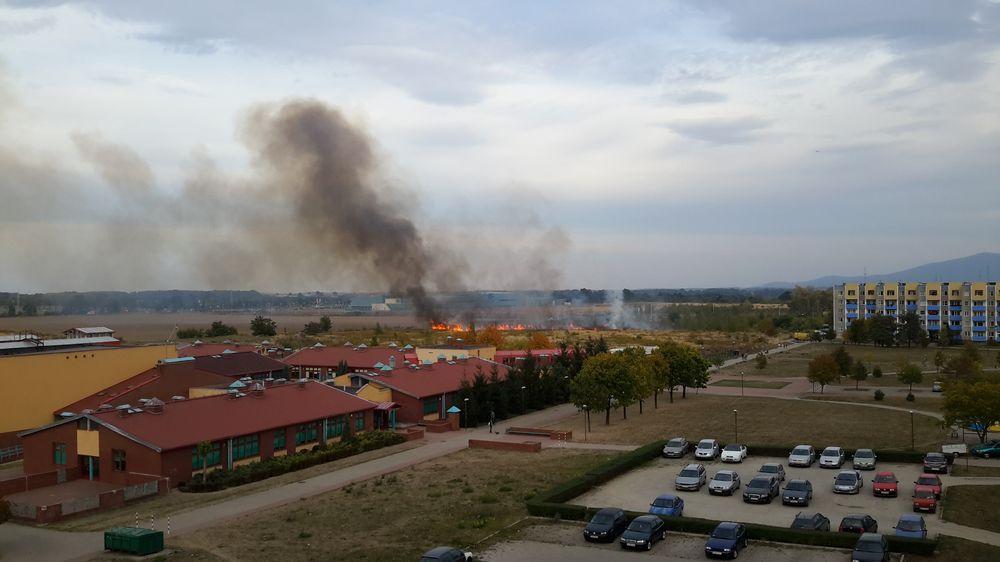Pożar trawy na Os. Zawiszów [FOTO]