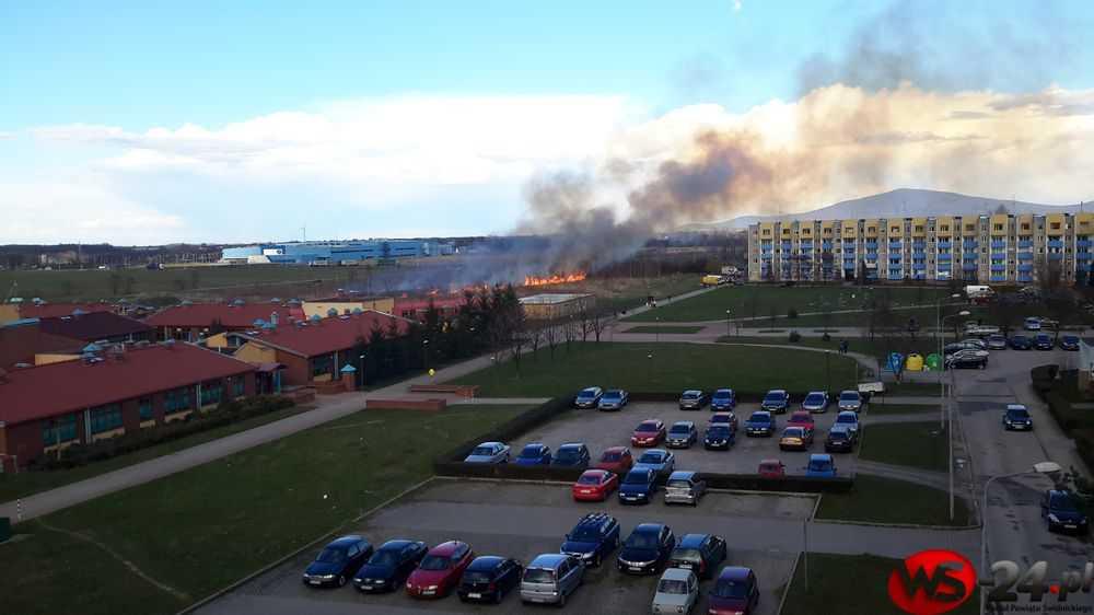 Znowu podpalili trawy (FOTO)