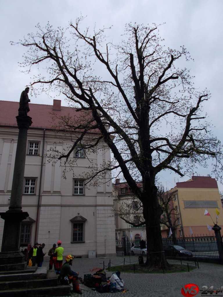 kasztanowiec katedra (1)