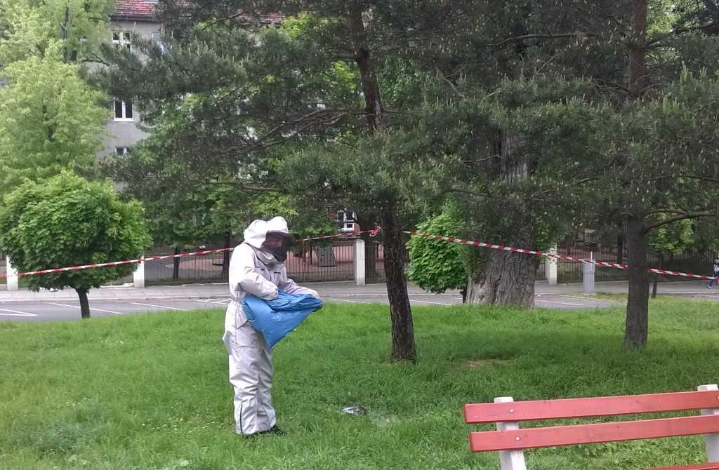 Pszczoły przy placu zabaw