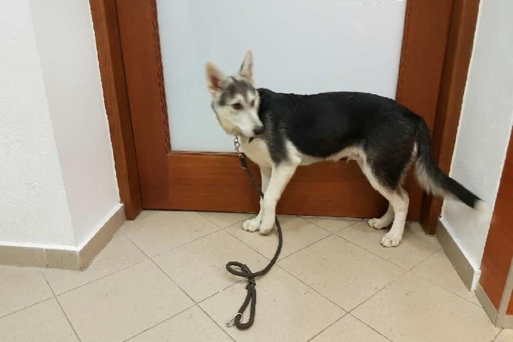 Podrzucił psa strażnikom miejskim