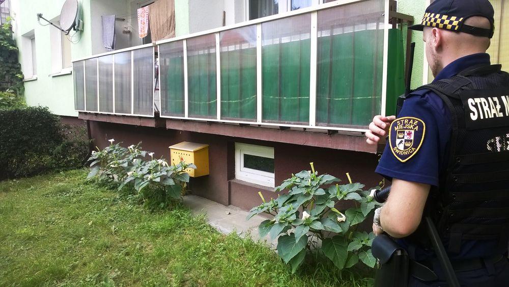 Trująca roślina pod balkonem