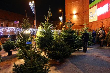 Świąteczne drzewka przy Galerii Świdnickiej