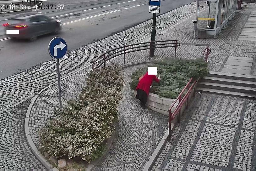 Kradła miejskie rośliny