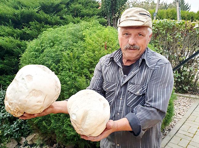 W Kalnie rekordowe grzyby